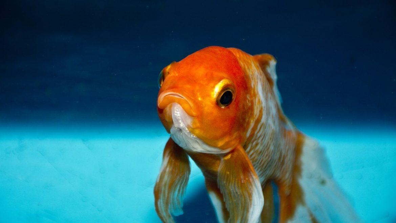 """תמ""""א 38 – דג הזהב של הדיירים"""